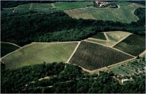 Castello di FonterutoliSample 1 – Vineyard: Siepi, Parcel: Pian del Melo