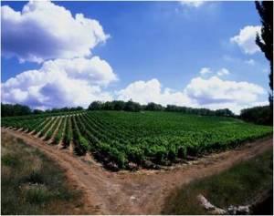 Castello di FonterutoliSample 2 – Vineyard:Caggio, Parcel: Pero