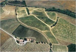 Castello di FonterutoliSample 3 – Vineyard: Belvedere, Parcel: Casa