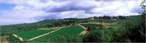 Castello di Fonterutoli Sample 4 – Vineyard: Fonterutoli, Parcel: S.Antonio