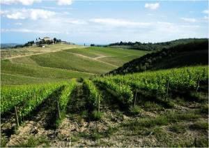 Tuscany:  the region of Chianti Classico