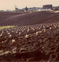 Quarter Mile Lane planted with Pinot Noir, Pinot Gris, Chardonnay, and Riesling varietals in 1972