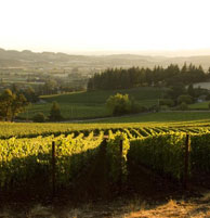 The Bryan Creek Vineyard that continues to be a great source of Pinot Noir, Pinot Blanc, and Pinot Gris in 1989
