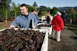 Viticulturist Chad Vargas