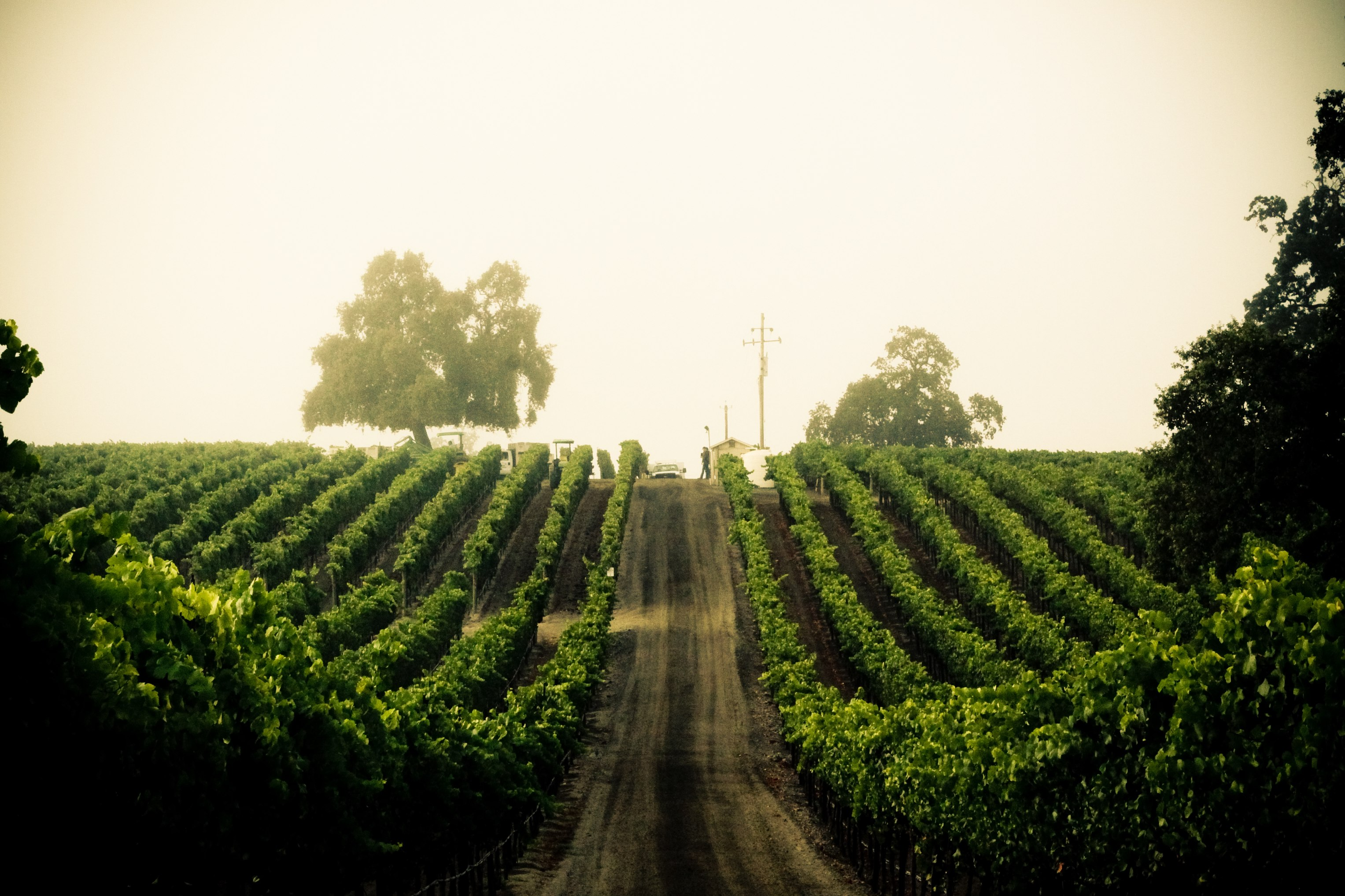 A great American wine story Balletto Vineyards and Winery ...